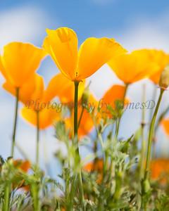 Flowers_20140405-82