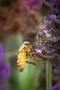 Bee_20140803