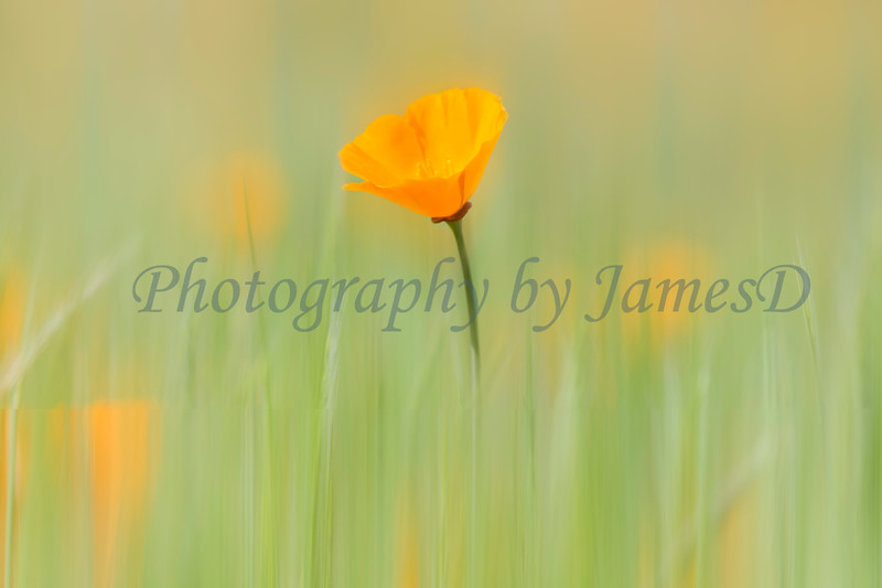 © JamesD Photography, All rights reserved