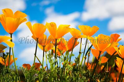 Flowers_20140405-89
