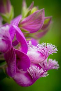 Flowers 20170320-403