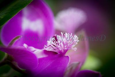 Flowers 20170320-358