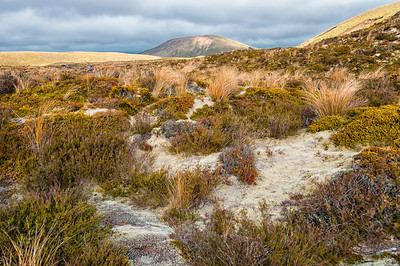 Tussock and alpine moss Mangatepopo Valley Tongariro Crossing