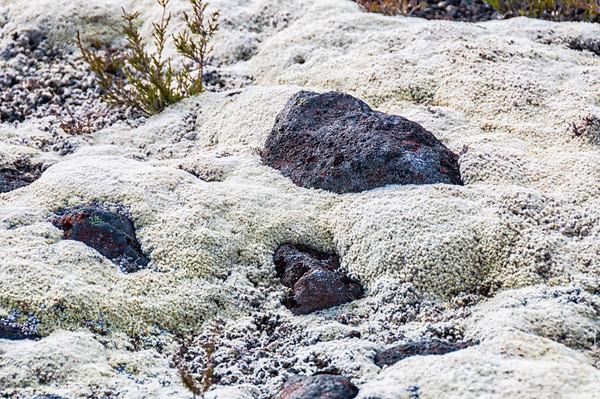 Alpine moss Mangatepopo Valley