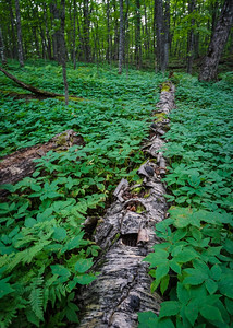 Backwoods, Ishpeming, MI