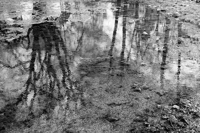 Trees reflected in pond, Sibelius Monument. Helsinki, Finland