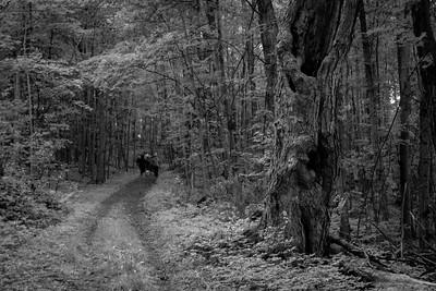 Backwoods, Ishpeming, MI.