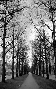 Trees along Mechelininkatu St, Helsinki, Finland