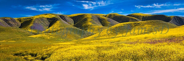Carrizo Plains Superbloom 20170402-563 (60x20 inch or 30x10 inch)