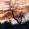Morning tree, Little Death Hollow