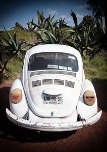 VW, Yucatan Jungle, Mexico
