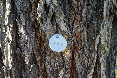 Tree #448 tag.  (The City of Denver has ID tags on many trees in this park and neighborhood)