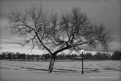 Tree #448 and Boathouse winter B&W.  Alternate angle #1