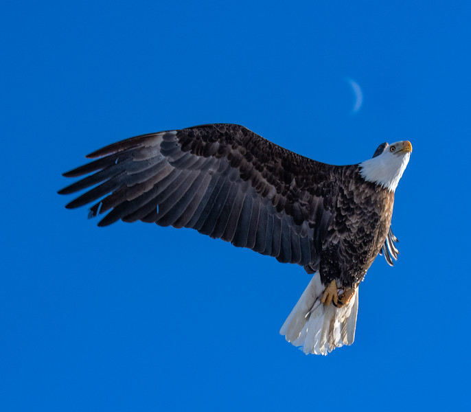 The Eagle, the Fish and the Moon