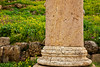 Column and Flowers, Roman Ruins of Jerash