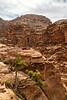 Canyon Tree, Dana Biosphere Reserve