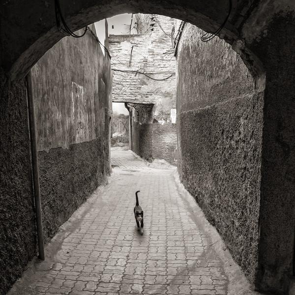 Alley Cat, Marrakech