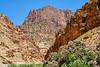 Canyon Oleander