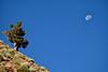 Juniper and Moon
