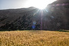 Sunrise over Barley Field