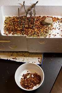 Chili Flake Forest (making of)