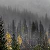 foogy mountainside
