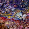 "Selected as an Editor's Favorite by ""National Geographic"" for Everyday Science assignment.  The volcanic soil at Lake Myvatn in northern Iceland makes a fertile habitat for colorful lichens.  The amazing palette of colors in this image is entirely natural."