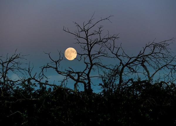 mesa verde moonrise
