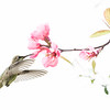 Hummer and Quince Blossom