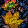 fall embers