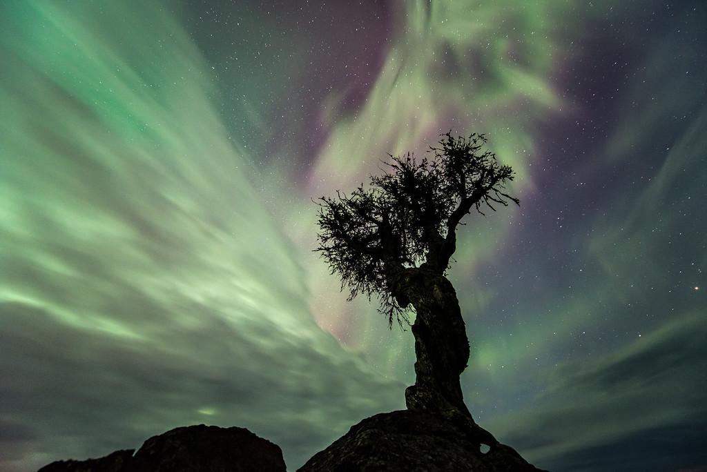 """AURORA 7807<br /> <br /> """"Aurora Clouds""""<br /> <br /> Northern Lights on May 8, 2016"""