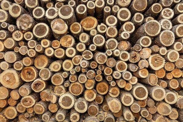 """""""Log Abstract"""""""