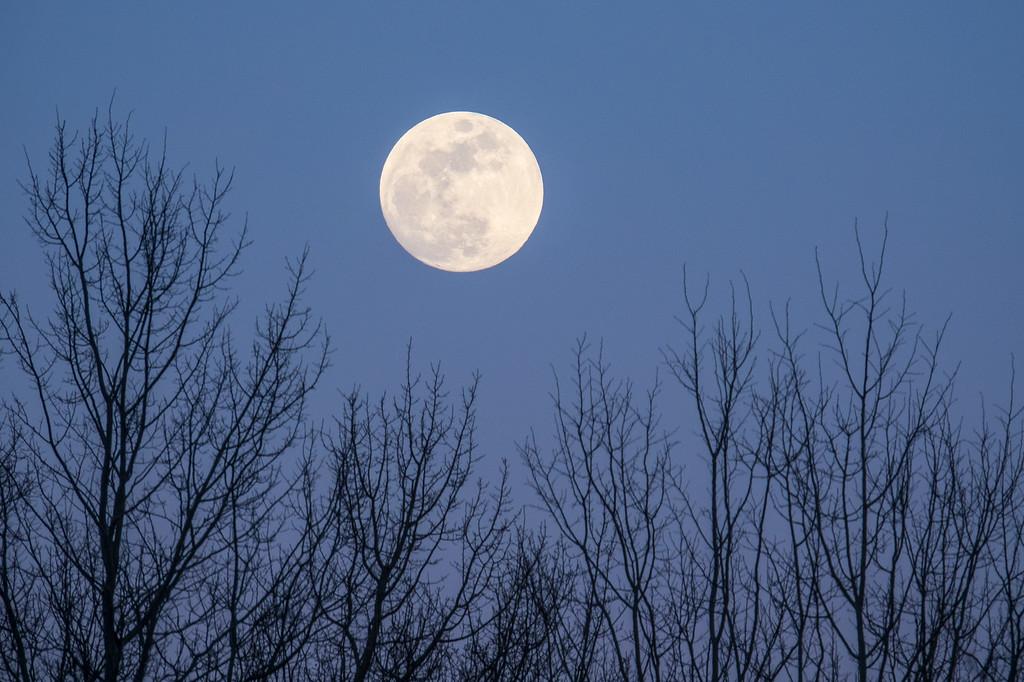 """MOONLIGHT 01625<br /> <br /> """"March Moon"""""""