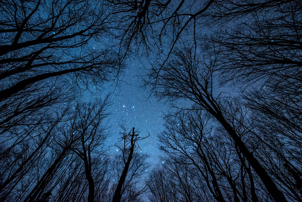 "MILKY WAY 1992<br /> <br /> ""Quiet Night in the Maple Forest"""