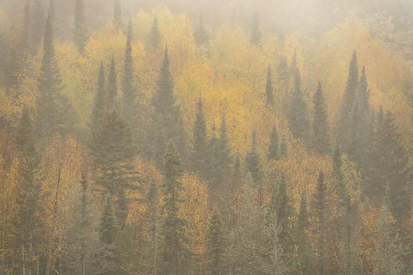 """Autumn Fog"""