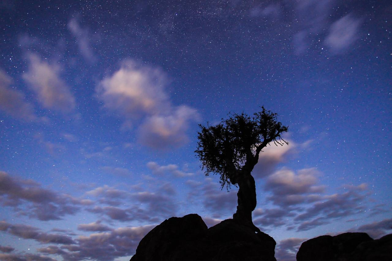 "MILKY WAY 2780<br /> <br /> ""September Stars, Spirit Tree""<br /> <br /> Grand Portage, MN"