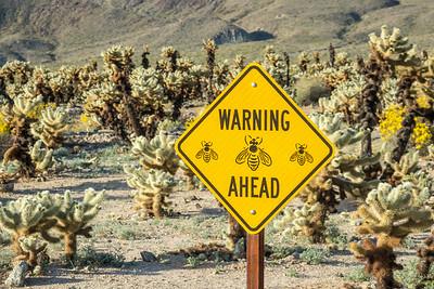 CALIFORNIA 02769  Bee awareness sign at the Cholla Garden  Joshua Tree National Park