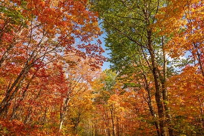 """""""Colorful Canopy"""""""