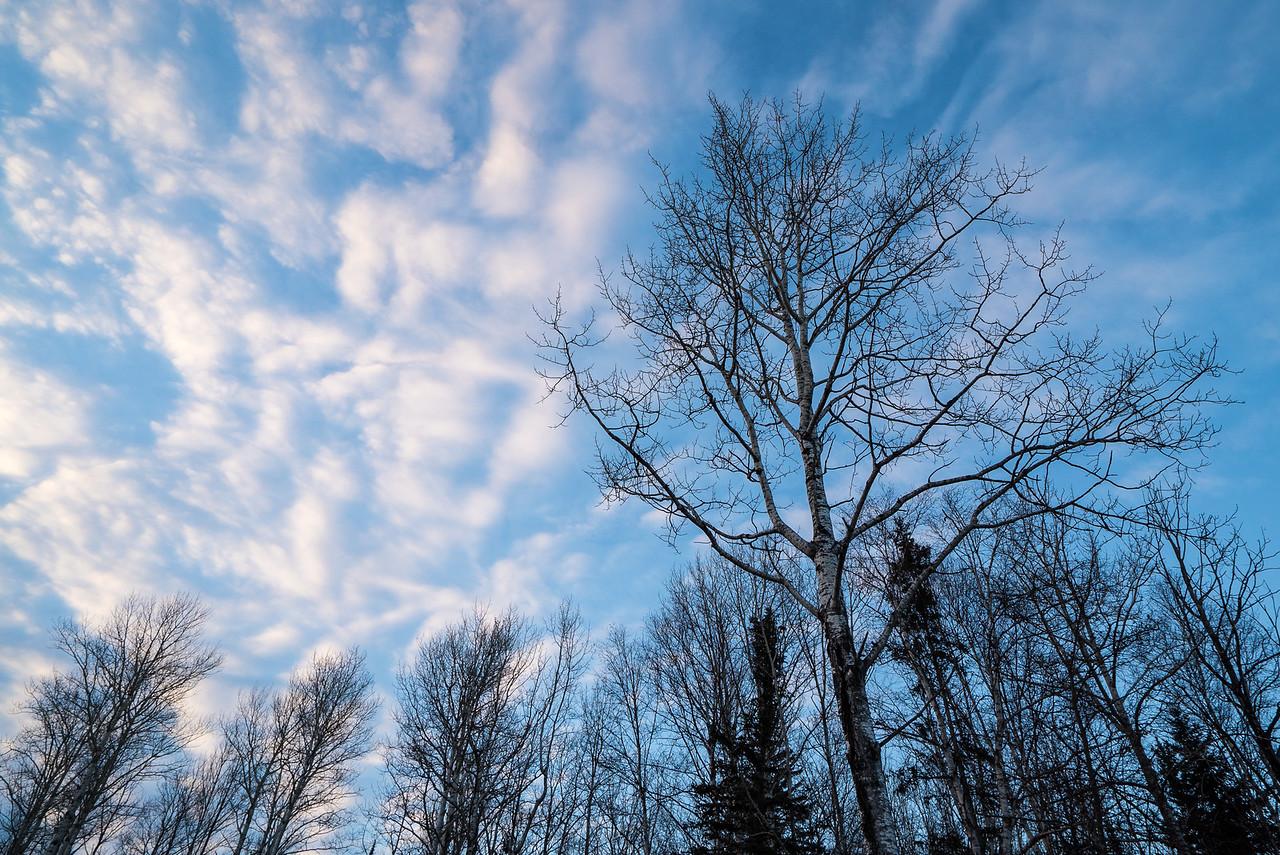 """FOREST 00364<br /> <br /> """"Aspen Sunset"""""""