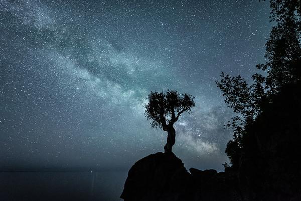 """""""June Milky Way over the Spirit Tree"""""""