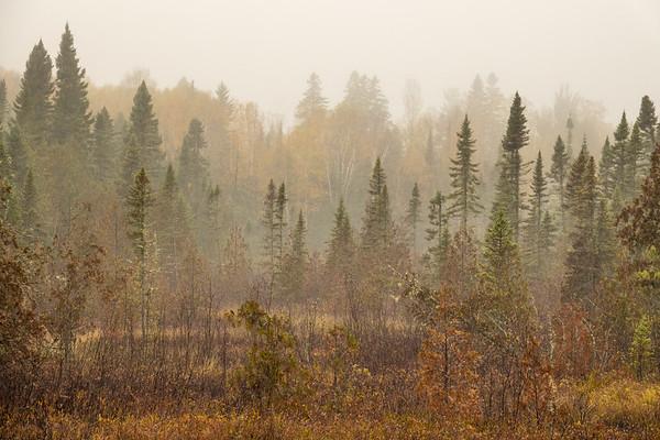 """October Forest"""