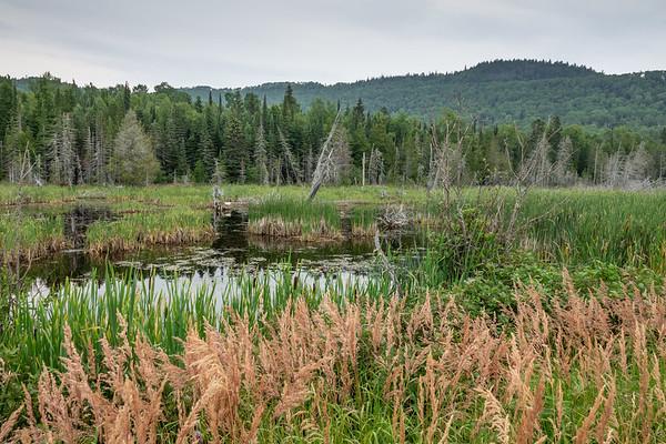 """Swan on Little Lake"""