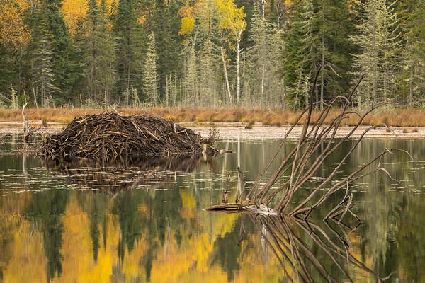 """Autumn Beaver Pond"""
