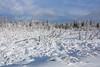 "FOREST 03746<br /> <br /> ""Snowy December Swamp""<br /> <br /> Grand Portage, MN"