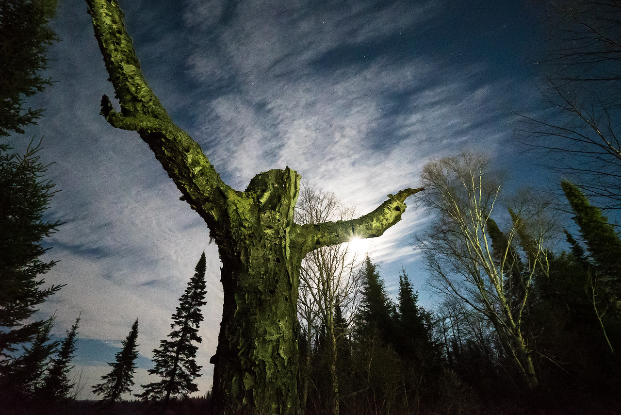 "MOONLIGHT 00242<br /> <br /> ""Birch Tree Man in the Moonlight""<br /> <br /> Grand Portage State Park, MN"