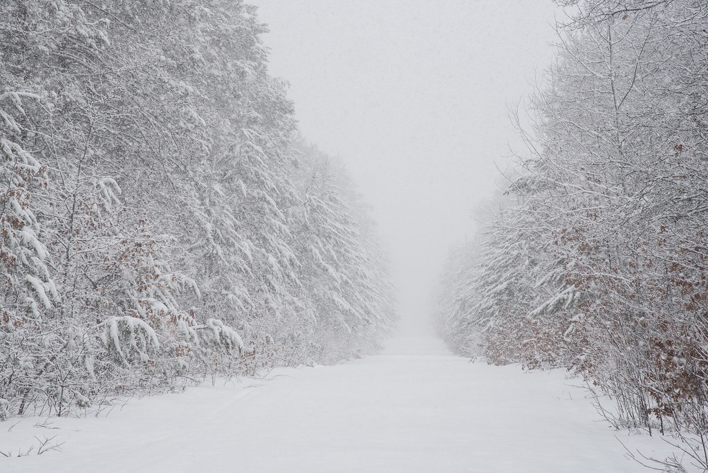 "WISCONSIN 6994<br /> <br /> ""Spring Snow Storm, Wisconsin Northwoods""<br /> <br /> Bayfield County"