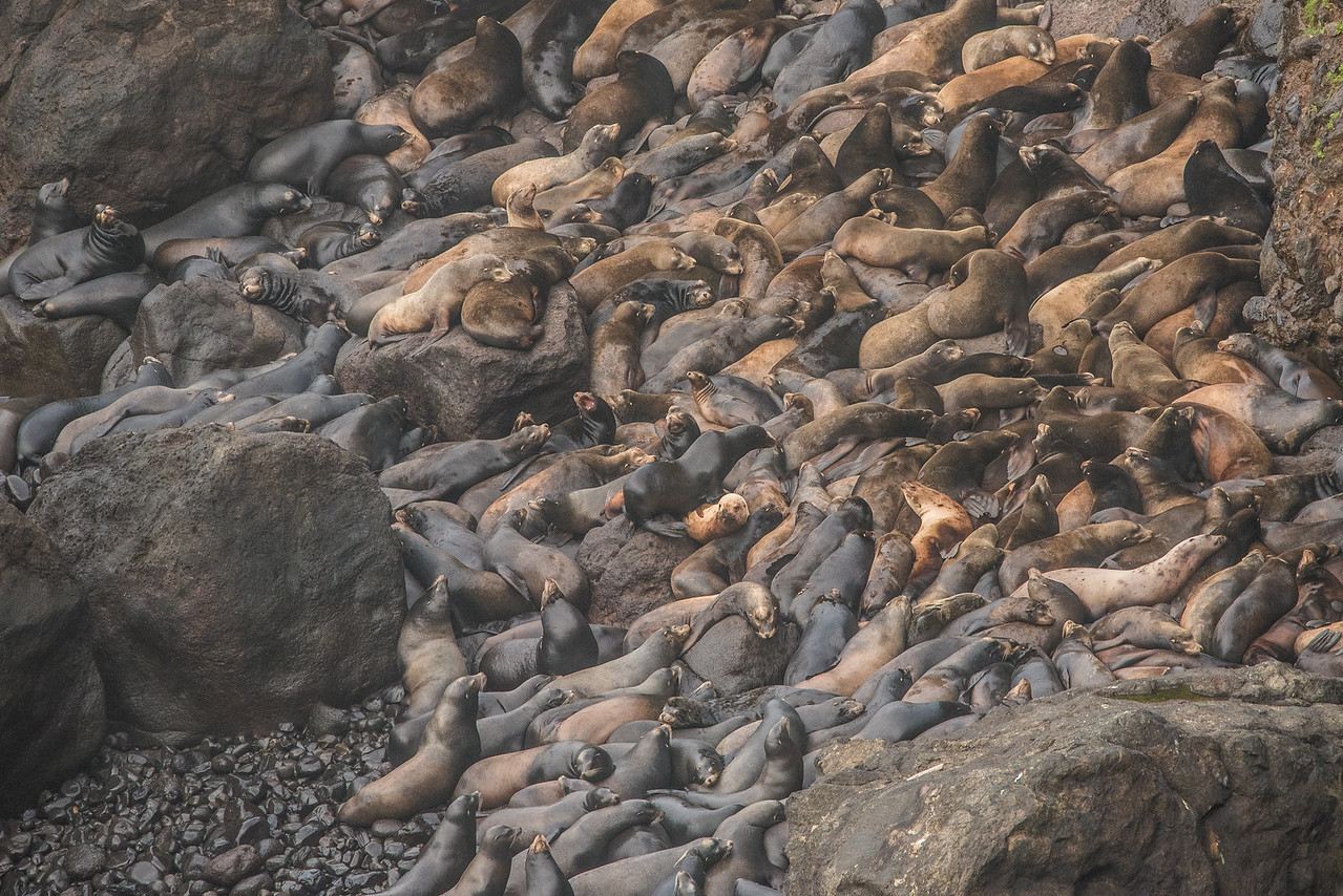 "OREGON 2973<br /> <br /> ""Seal haul-out near Heceta Head"""