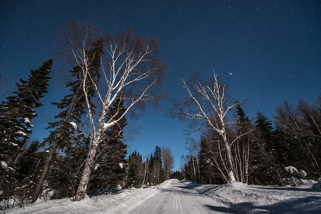 """MOONLIGHT 6750<br /> <br /> """"Moonlight on the Avenue of the Birches""""<br /> <br /> Superior National Forest, MN<br /> <br /> (FYI - There is no actual Avenue of the Birches, that is just my title for this photo)"""