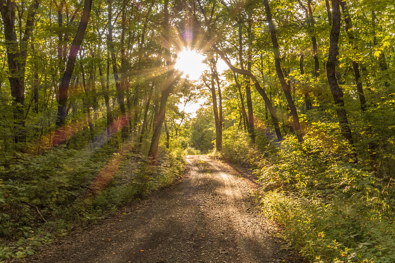 """FOREST 02361<br /> <br /> """"Beautiful Sunlight on Rengo Road""""<br /> <br /> Grand Portage, MN"""