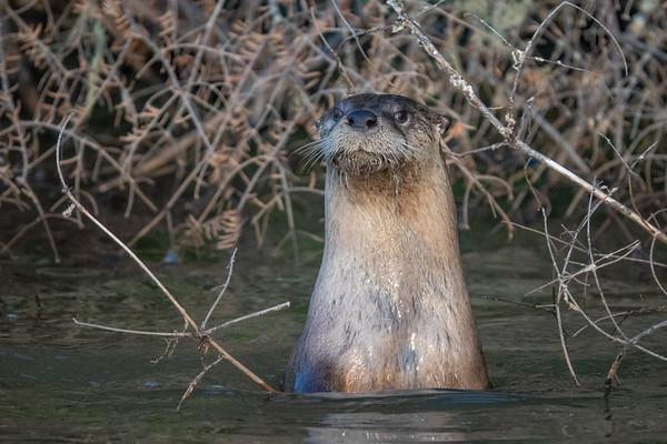 """""""Surprise Otter!"""""""